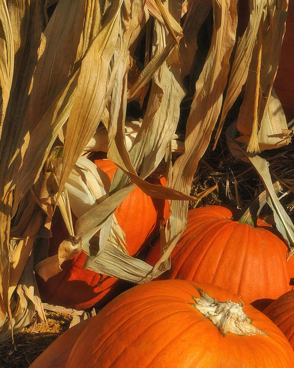 Harvest Poster featuring the photograph Pumpkin Harvest by Joann Vitali