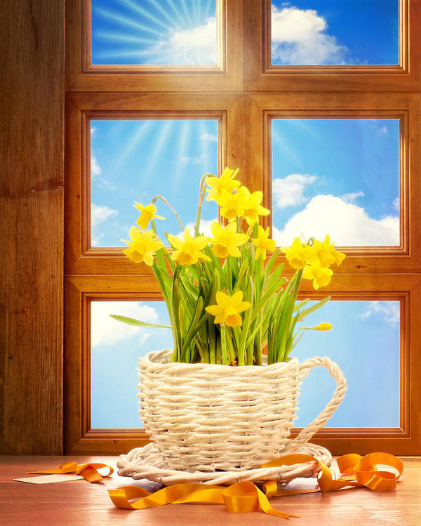 Spring Poster featuring the photograph Spring Window by Amanda Elwell