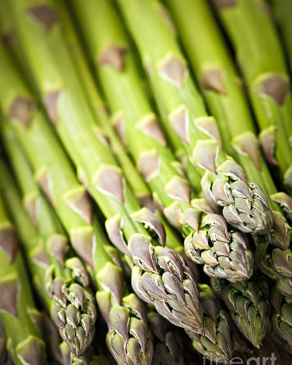 Asparagus Poster featuring the photograph Asparagus by Elena Elisseeva