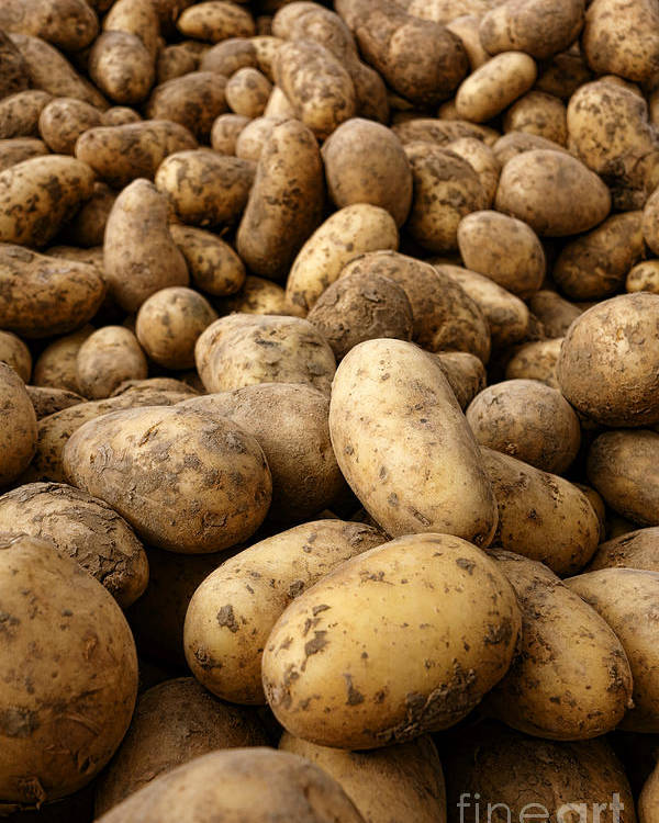 Potatoes Poster featuring the photograph Potatoes by Olivier Le Queinec