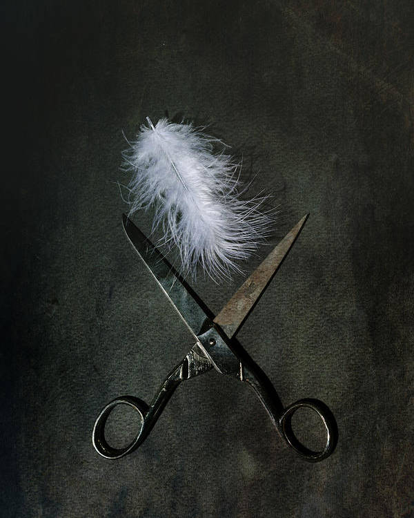 Feather Poster featuring the photograph Feather by Joana Kruse