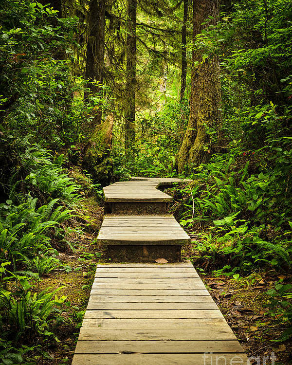 Rainforest Poster featuring the photograph Path In Temperate Rainforest by Elena Elisseeva