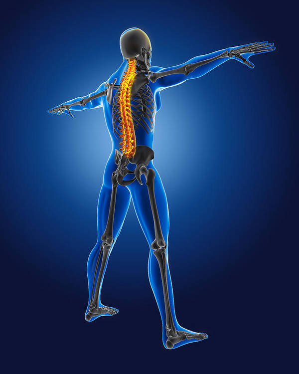 Human Poster featuring the digital art 3d Medical Man With Skeleton by Kirsty Pargeter