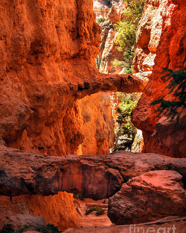 Bryce Canyon Poster featuring the photograph A Bridge by Robert Bales