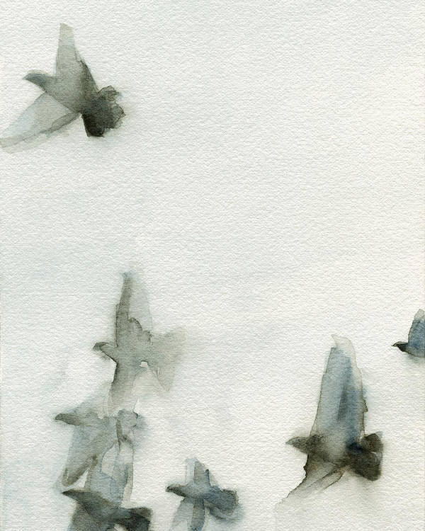 Bird Poster featuring the painting A Flock of Pigeons 1 Watercolor Painting of Birds by Beverly Brown