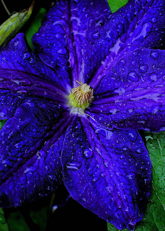 Flower Poster featuring the photograph A Gentle Rain by Frozen in Time Fine Art Photography