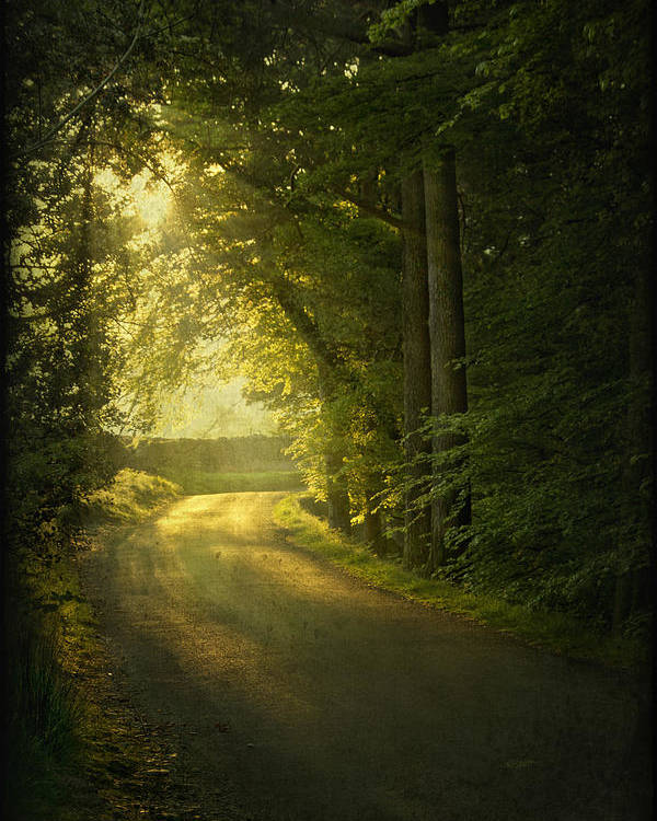Road Poster featuring the photograph A Path To The Light by Evelina Kremsdorf