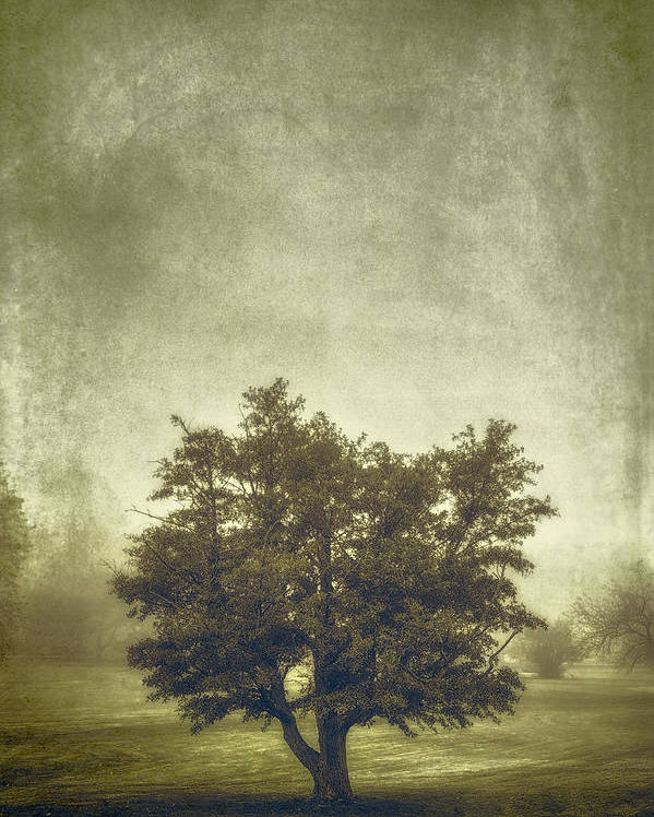 Tree Poster featuring the photograph A Tree In The Fog 2 by Scott Norris