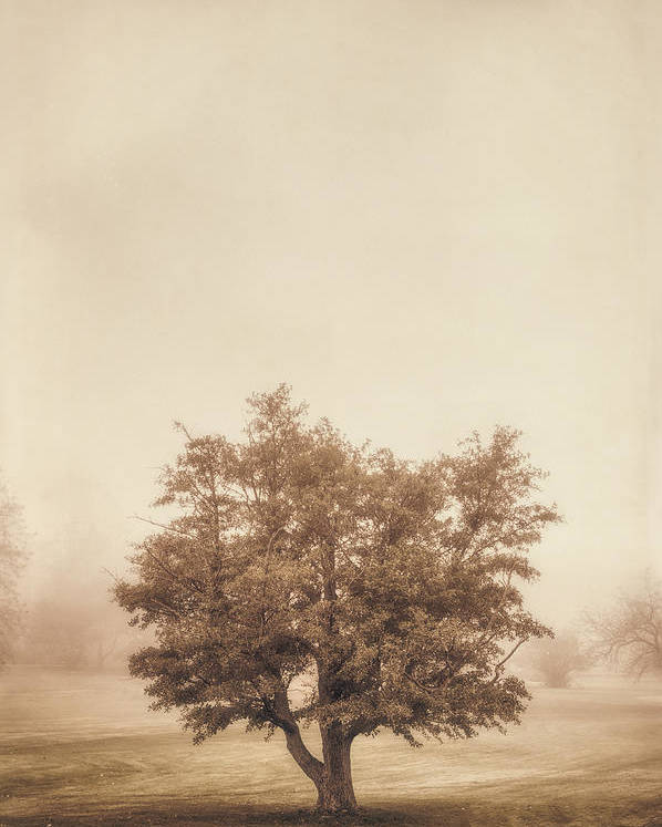 Tree Poster featuring the photograph A Tree In The Fog by Scott Norris