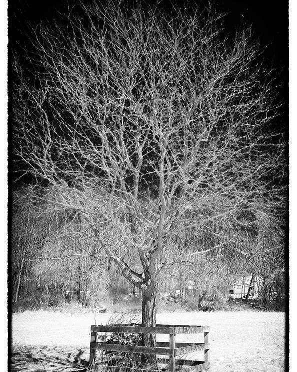 A Tree In The Snow Poster featuring the photograph A Tree In The Snow by John Rizzuto