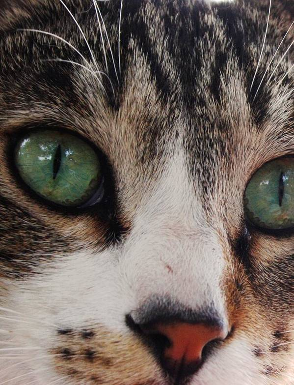 Cats Poster featuring the photograph Absolute Honesty by Anita Dale Livaditis