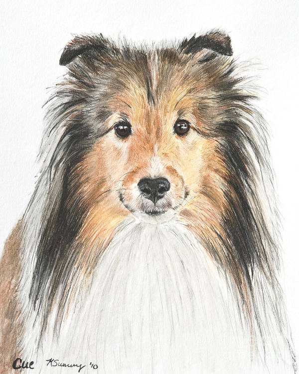 Shetland Sheepdog Poster featuring the pastel Agility Dog Sheltie In Pastel by Kate Sumners