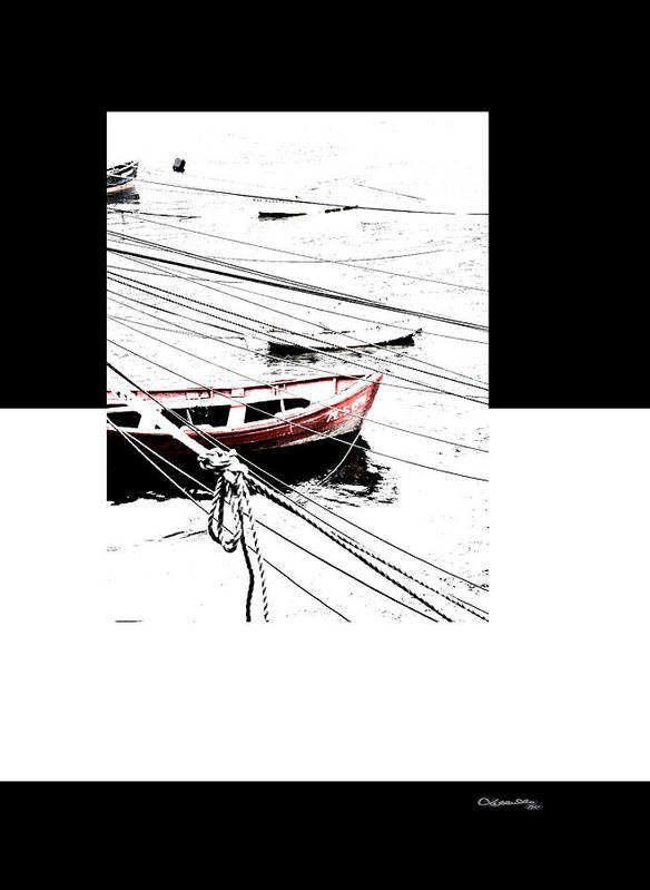 Albatros Poster featuring the digital art Albatros by Xoanxo Cespon