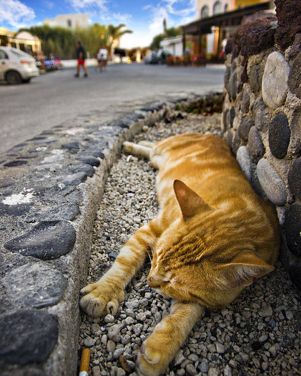Ginger Poster featuring the photograph Alley Cat Siesta by Meirion Matthias