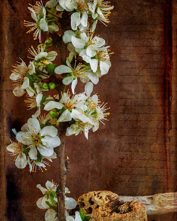 Spring Flowers Poster featuring the photograph Almond Blossom by Marco Oliveira