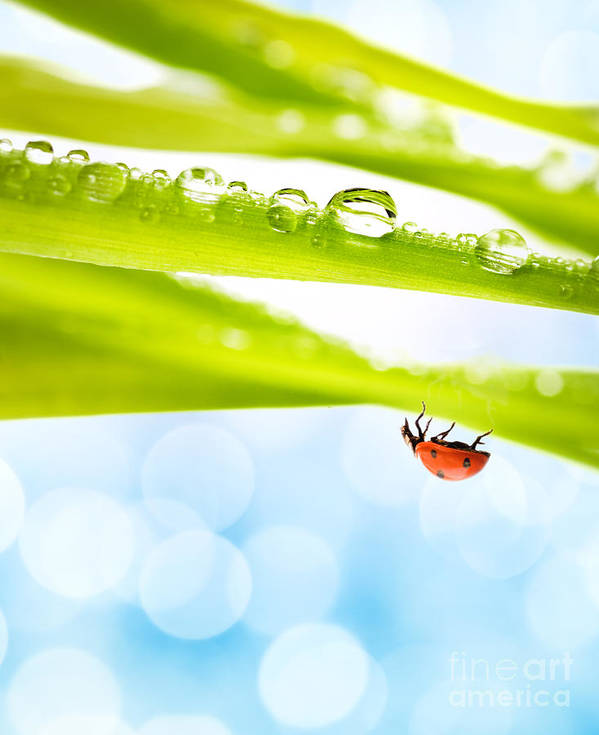 Alone Poster featuring the photograph Alone Ladybug by Boon Mee