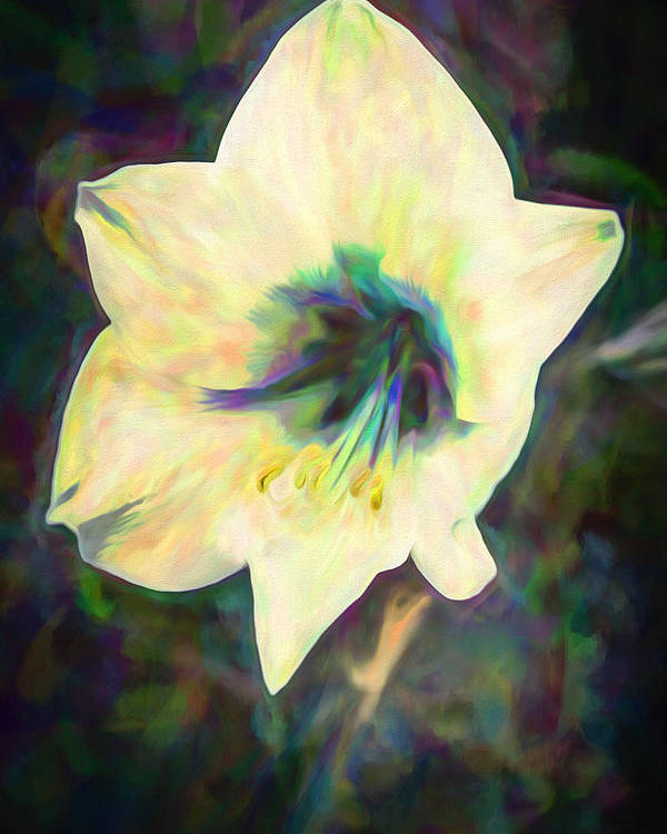 Amaryllis Poster featuring the mixed media Amaryllis by Priya Ghose