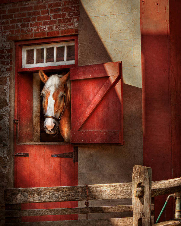 Calvin Poster featuring the photograph Animal - Horse - Calvins House by Mike Savad