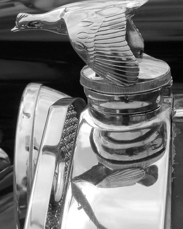 Car Poster featuring the photograph Antique Ford Hood Ornament by Brett Beaver