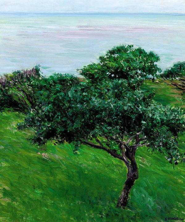 Impressionist; Landscape; Rural; Countryside; France; French; En Plein Air; Plein Air; Apple Tree; Apple Trees; Orchard; Tree; Trees; Green; Fruit Tree; Fruit Trees; Coast; Coastal; Seaside; Seascape; Blue; Green; Trouville; Caillebotte; Gustave; Fruit; Wind; Breeze; Nature; Natural; Impressionism; Tranquil; Tranquility; Leaf; Leaves; Trouville; Scenery Poster featuring the painting Apple Trees By The Sea Trouville by Gustave Caillebotte