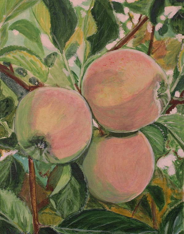 Apple Poster featuring the painting Apples by Vera Lysenko