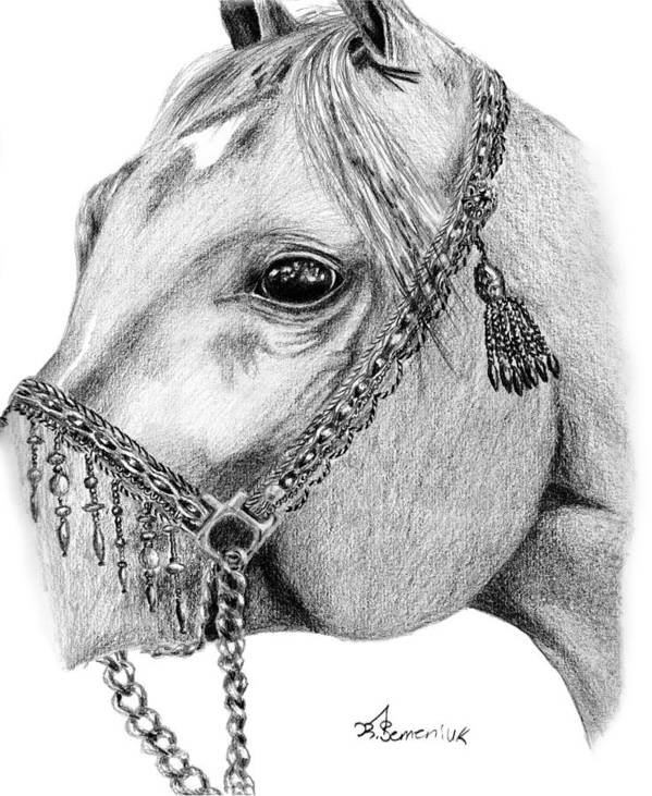 Horse Poster featuring the drawing Arabian Halter by Kayleigh Semeniuk