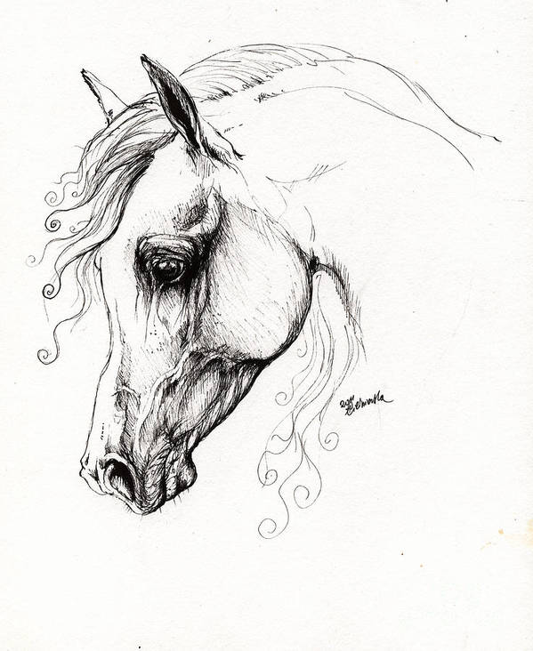Fairytale Poster featuring the drawing Arabian Horse Drawing 15 by Angel Tarantella