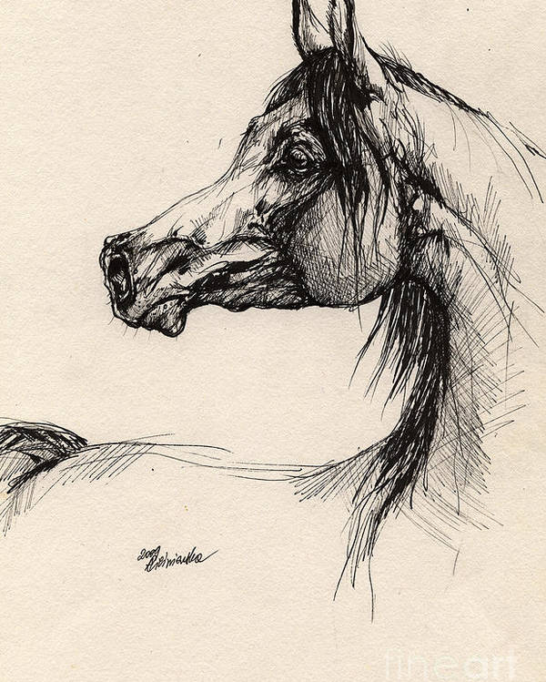 Horse Drawing Poster featuring the drawing Arabian Horse Drawing 26 by Angel Ciesniarska