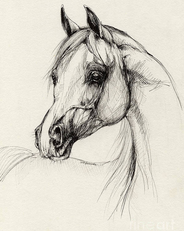 Horse Poster featuring the drawing Arabian Horse Drawing 27 by Angel Ciesniarska
