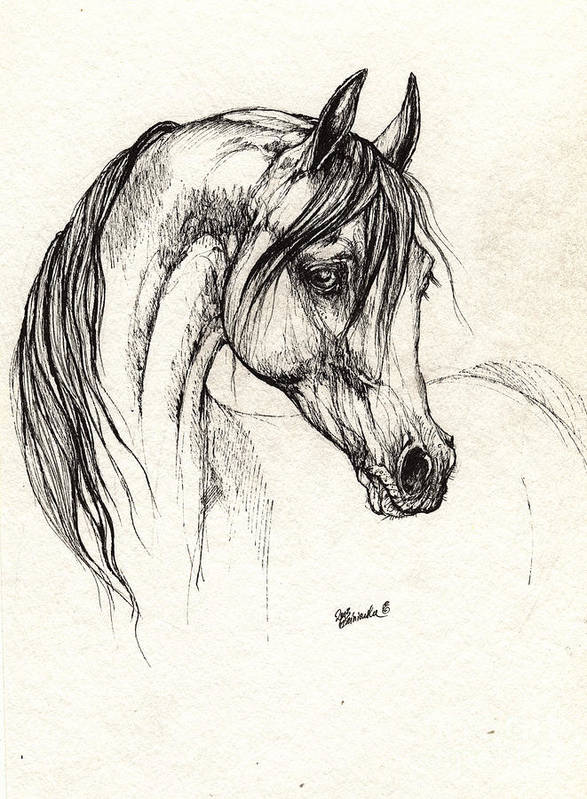 Horse Poster featuring the drawing Arabian Horse Drawing 28 08 2013 by Angel Ciesniarska