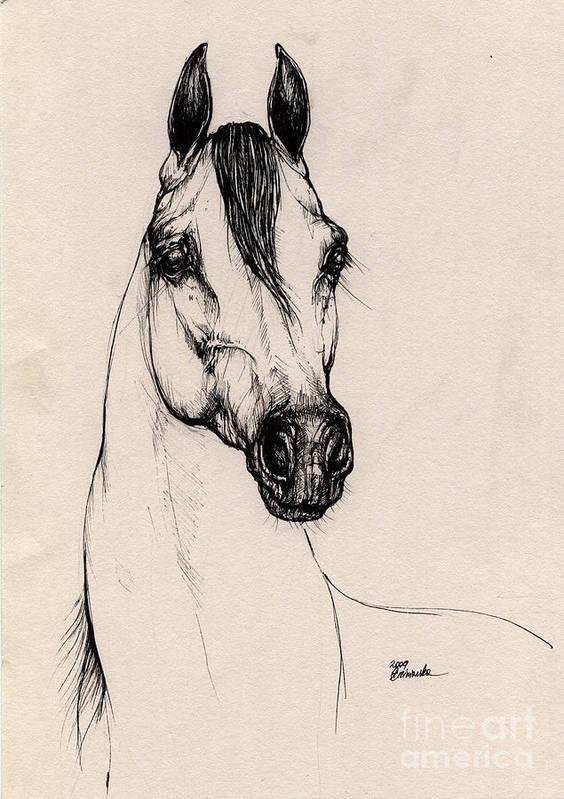 Arabian Horse Poster featuring the drawing Arabian Horse Drawing 29 by Angel Ciesniarska