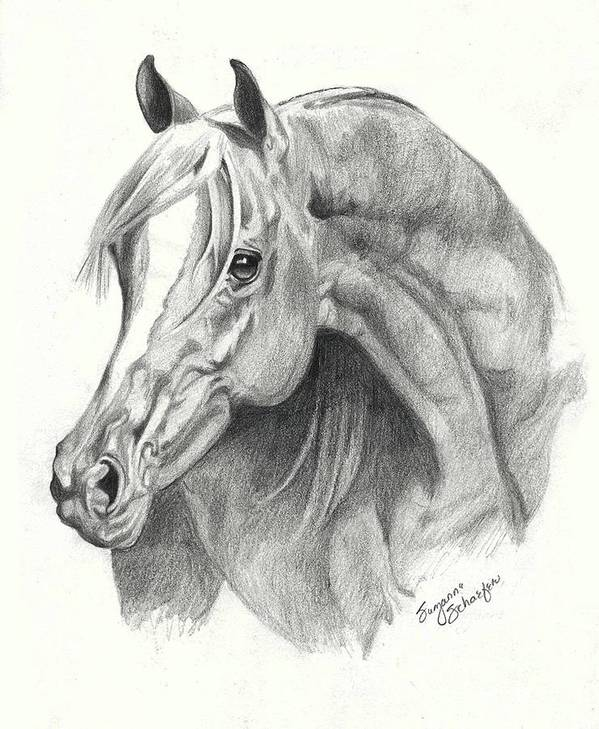 Arabian Stallion Poster featuring the drawing Arabian Stallion by Suzanne Schaefer