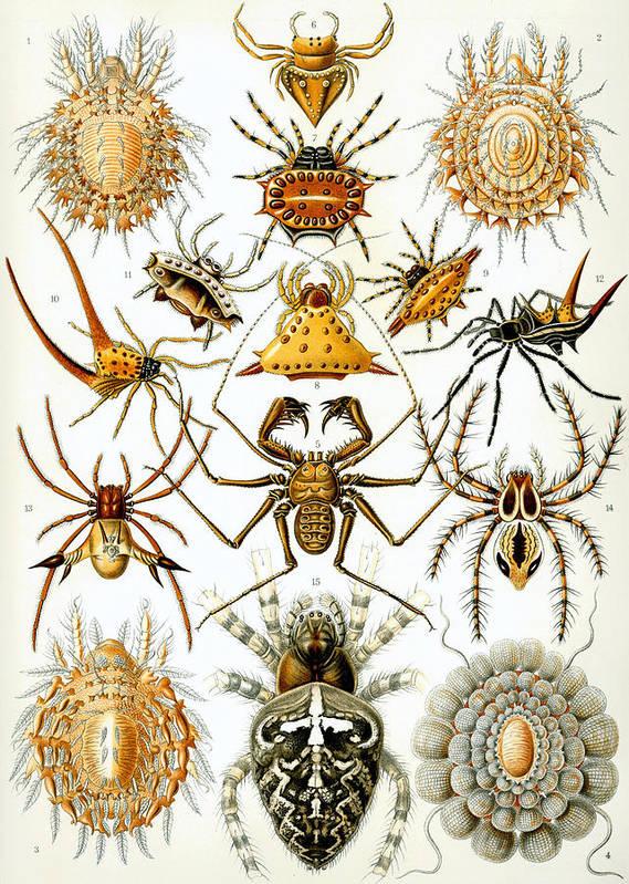 Arachnida Poster featuring the digital art Arachnida by Georgia Fowler