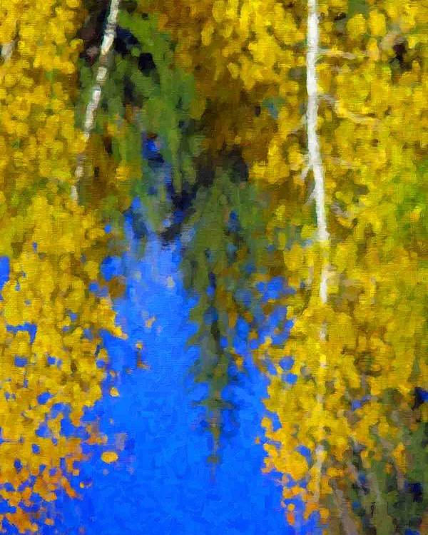 Autumn Close Up Image Of Yellow Colored Aspen And Pine Trees And Blue Sky Reflecting In Water Poster featuring the photograph Aspen Reflection by Pat Now