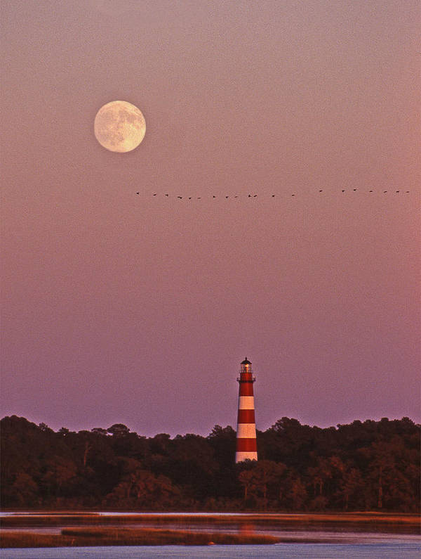 Lighthouse Poster featuring the photograph Assateague Lighthouse Va by Skip Willits