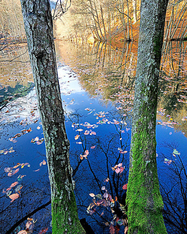 Autumn Poster featuring the photograph Autumn - 7 by Okan YILMAZ