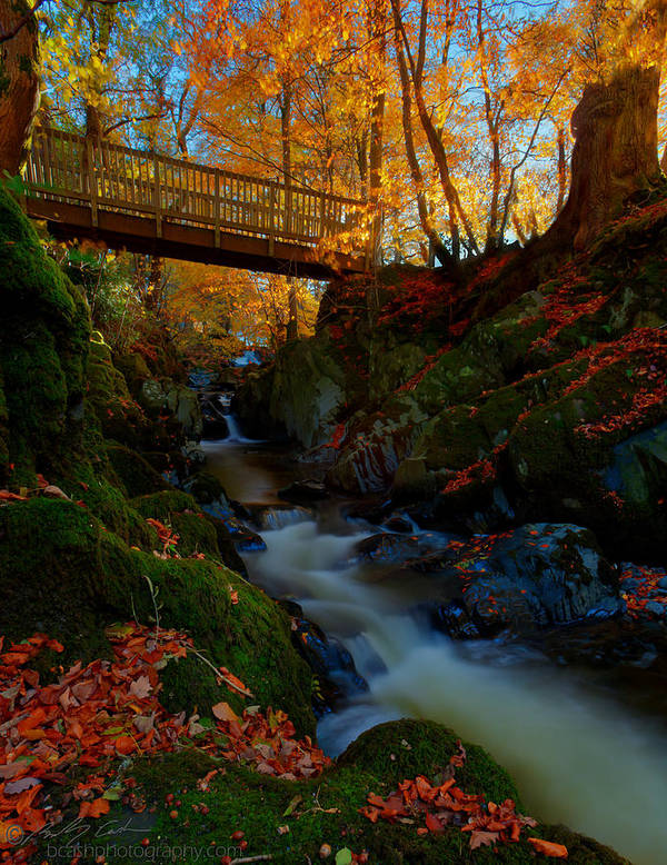Autumn Poster featuring the photograph Autumn Bridge by Beverly Cash