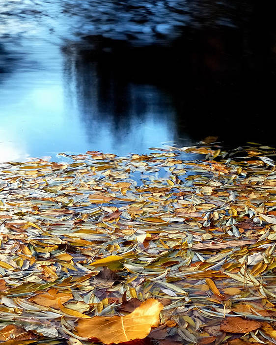 Waters Poster featuring the photograph Autumn Lake by Steven Milner