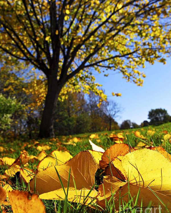 Autumn Poster featuring the photograph Autumn Landscape by Elena Elisseeva