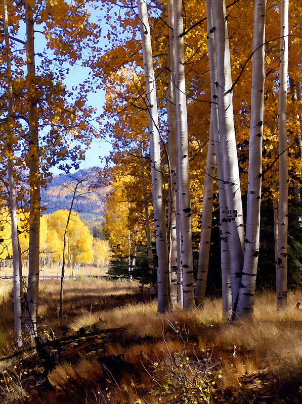 Trees Poster featuring the photograph Autumn Paint Chama New Mexico by Kurt Van Wagner