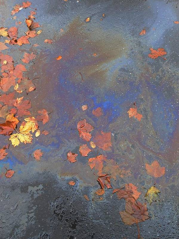 Autumn Puddle Poster featuring the photograph Autumn Puddle by John Norman Stewart