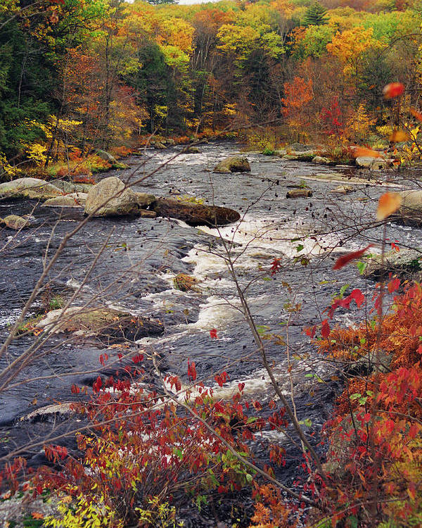 Autumn Poster featuring the photograph Autumn River by Joann Vitali