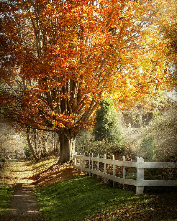 Autumn Poster featuring the photograph Autumn - Westfield Nj - I Love Autumn by Mike Savad