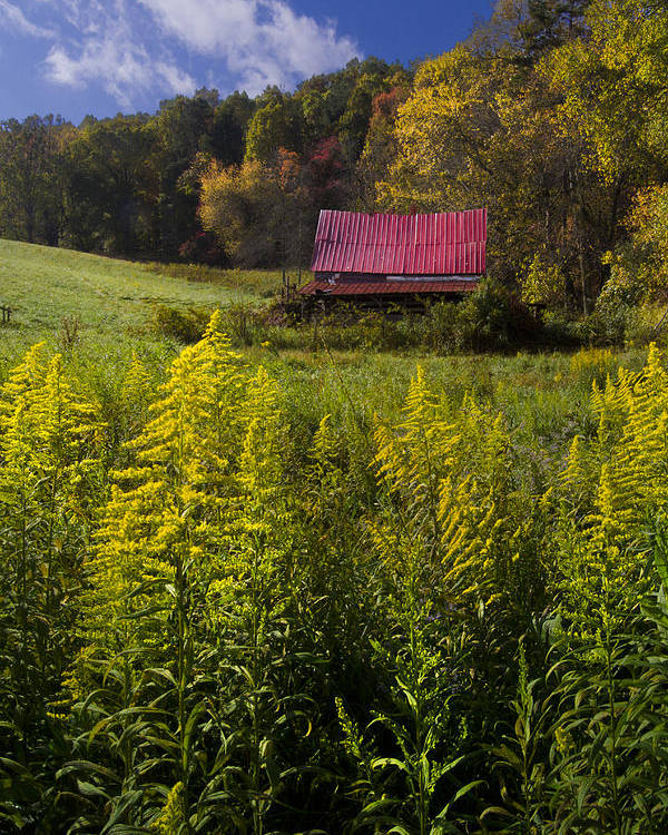 Barn Poster featuring the photograph Autumn Wildflowers by Debra and Dave Vanderlaan