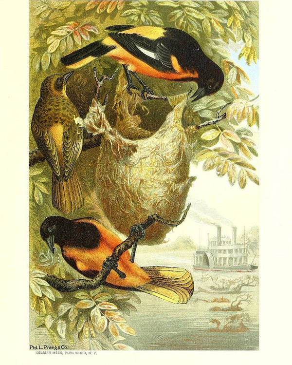 Baltimore Poster featuring the painting Baltimore Orioles by Philip Ralley