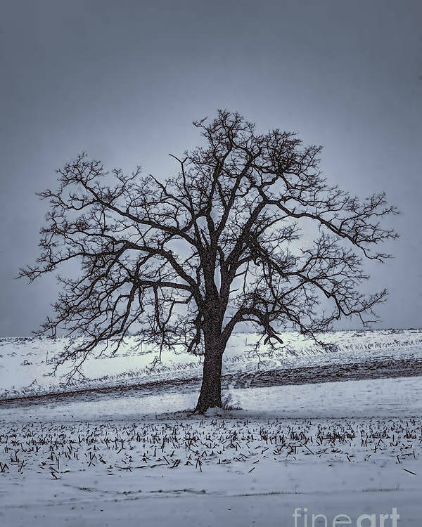 Tree Poster featuring the photograph Barren Winter Scene With Tree by Dan Friend