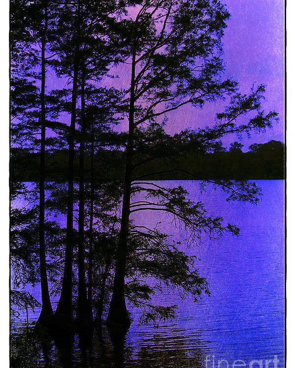 Swamp Poster featuring the photograph Bayou In Moonlight by Judi Bagwell