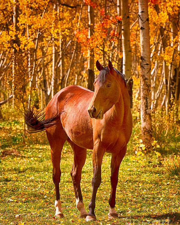 Horse Poster featuring the photograph Beautiful Horse In The Autumn Aspen Colors by James BO Insogna