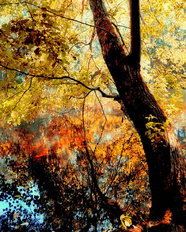 Trees Poster featuring the photograph Beauty Reflected by Heather Fox