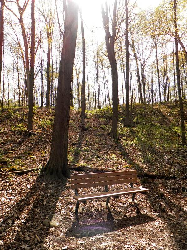 Trees Poster featuring the photograph Bench In The Woods by Michael Caron